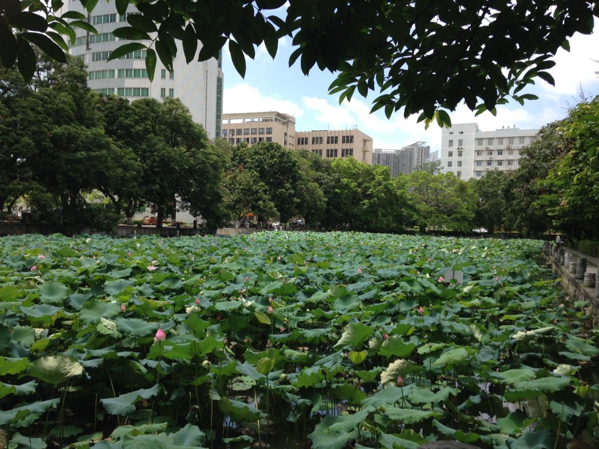 Kampus Guangxi University jest pełen zieleni i parków
